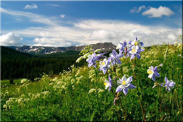 Sheriff Reservoir Columbines