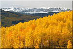 Golden Aspens in Williams Fork Valley
